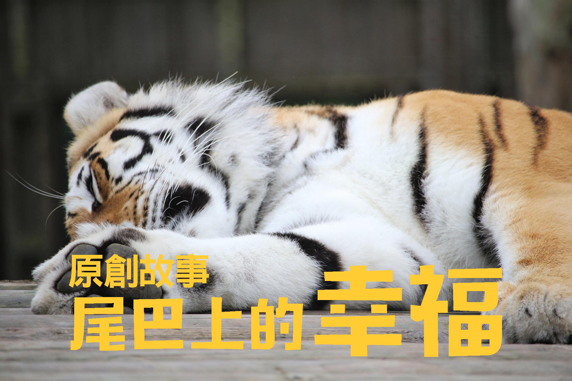 [原創故事]老虎尾巴上的幸福