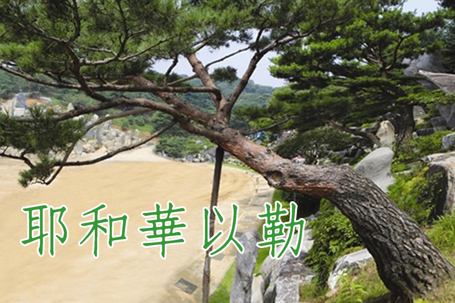 [松樹]耶和華以勒松:得勝患難之後的作品人生